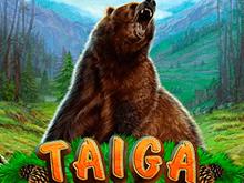 Игровой автомат Тайга на деньги
